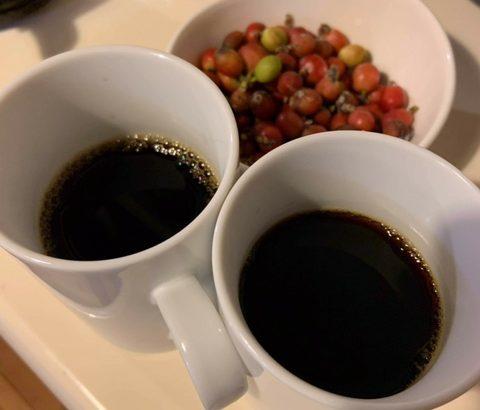 移住後に知った石垣島の隠れたおすすめ:石垣島産コーヒー