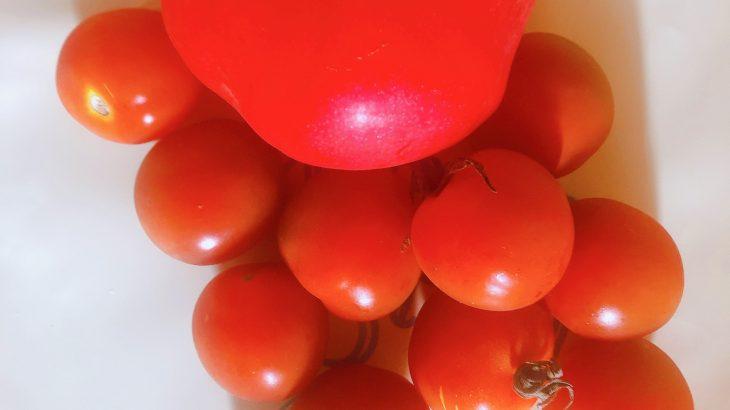 石垣島産プチトマト&トマトをおいしく楽しく
