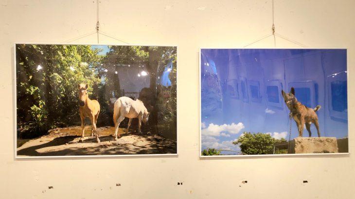 ホテルエメラルドアイル石垣島で開催中の仲西康治写真展「風のみち」